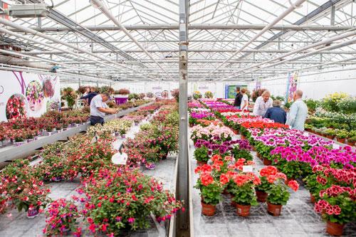 Planten groeien beter met AUDAC geluid bij Hendriks Young Plants